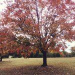 autumn #selah